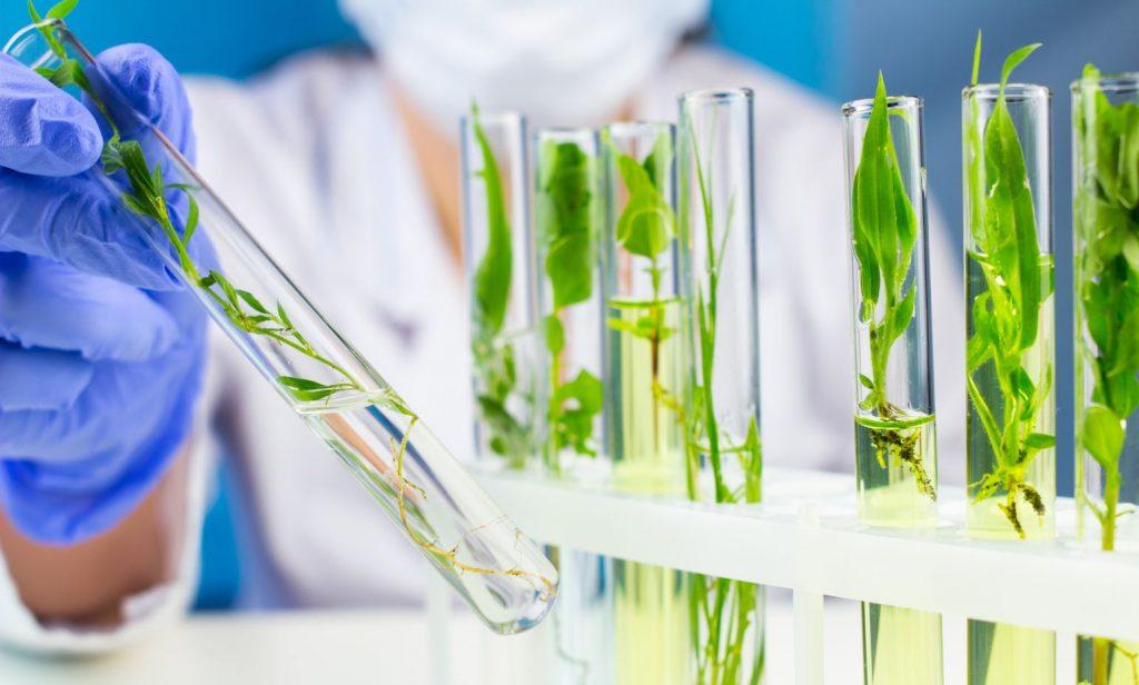 Consideraciones y opciones legales para el combate a la biopirateria en América Latina