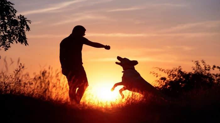 Apuntes sobre la responsabilidad Civil derivada de los daños causados por animales